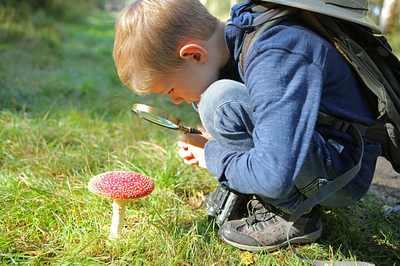 intossicazioni alimentari funghi