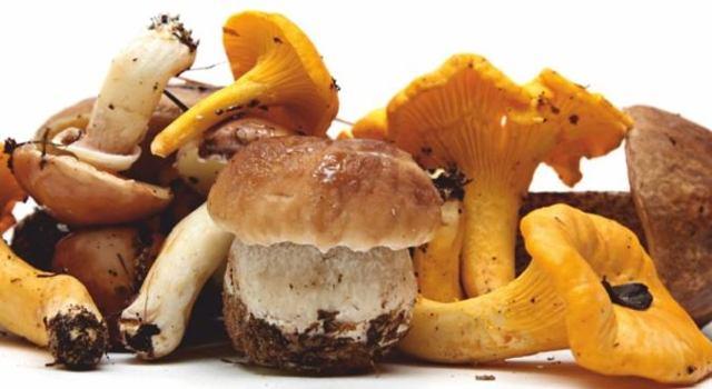 funghi e tartufi importati
