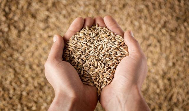 origine del grano