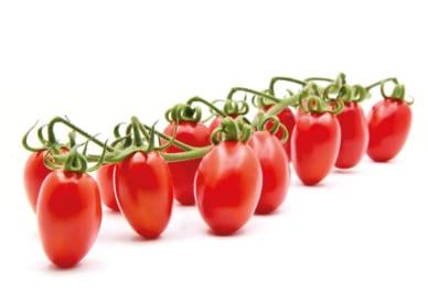 origine del pomodoro
