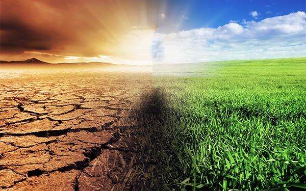 Danno Ambientale: responsabilità oggettiva e soggettiva